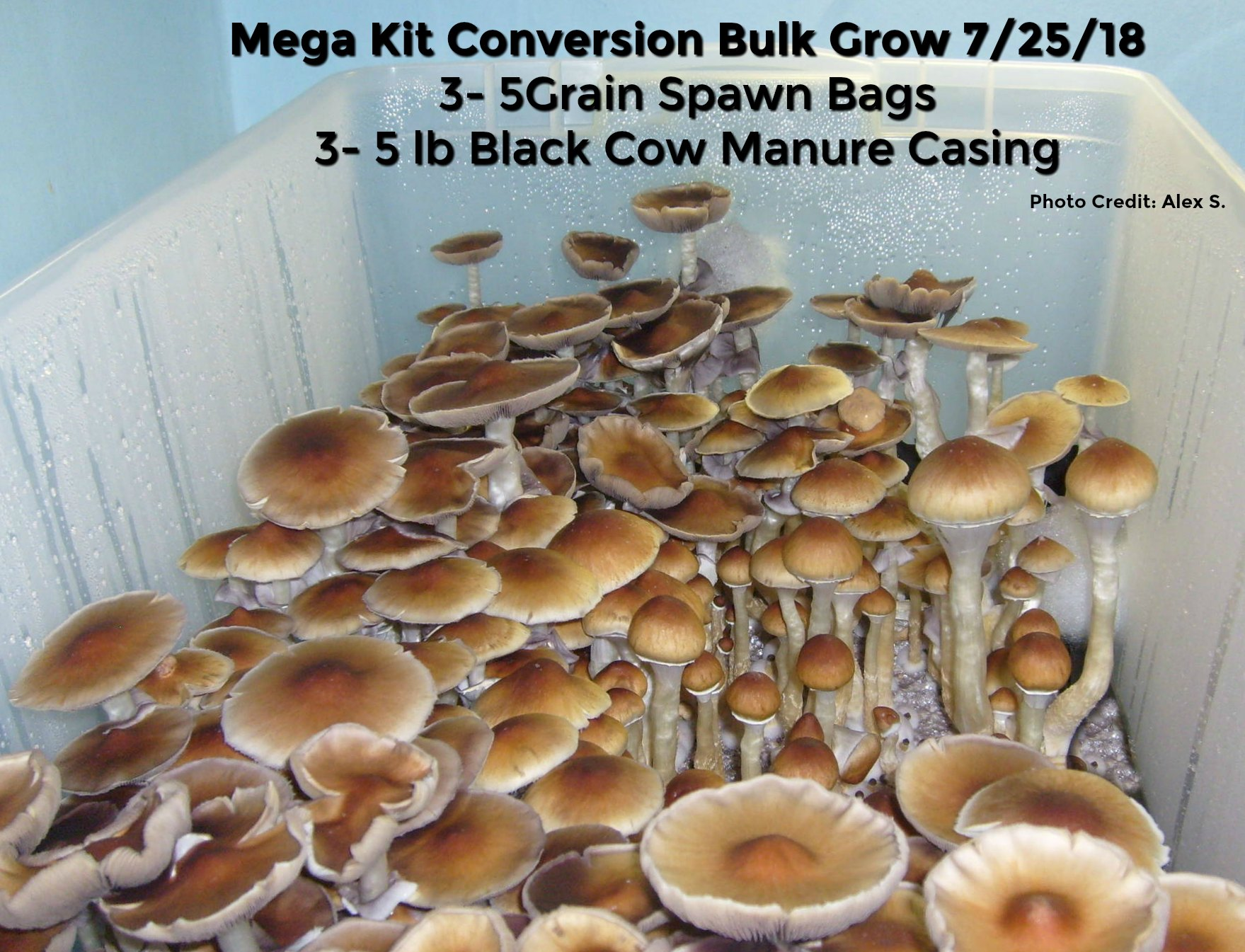 Bovine Manure Casing Mix Is The Best Producing Casing Mix