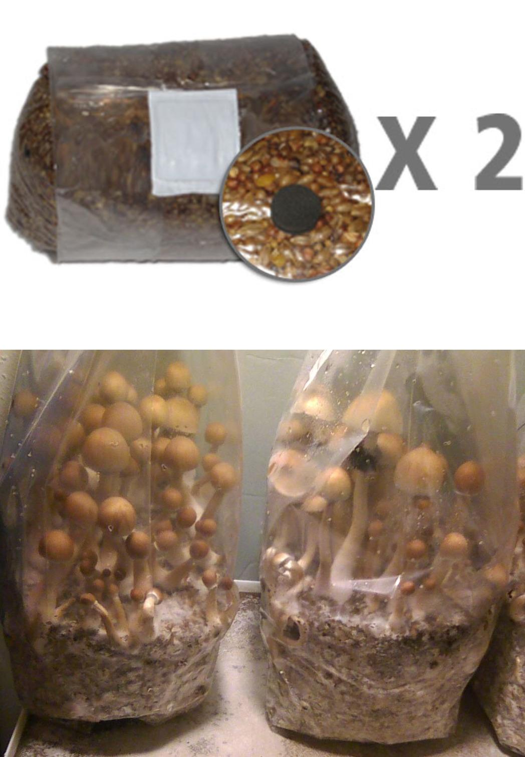 Huge Selection! 5lbs Bag Premium G1 Mushroom Spawn